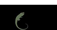 Iguana Art & Design